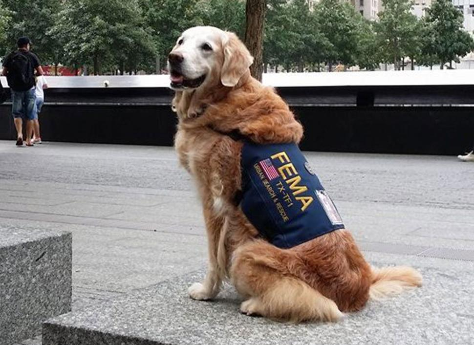 Bretagne, Last Alive 9/11 Rescue Dog Honored with Amazing 16 Birthday Party.