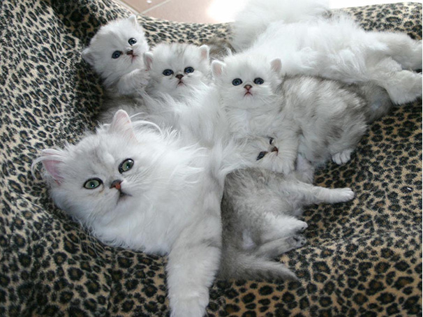 The Beautiful Cat photos with kittens