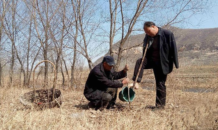 Armless Man and His Blind Friend Together Spent 10 Years Planting 10,000 Trees in China