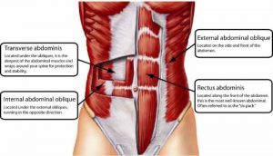 Core-Muscles-for-exercise