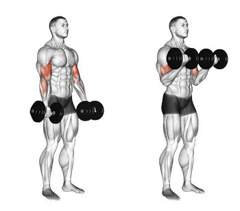 Weight loss Tips – Part 20 – Exercise Descriptions (Biceps)